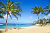 Fototapeta Fototapety z morzem do Twojej sypialni - Palm trees on the sandy beach in Hawaii