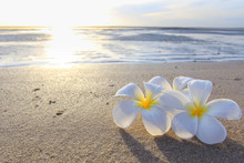 The Beautiful Flowers On Beach...
