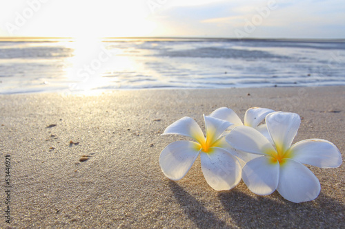 Spoed Foto op Canvas Frangipani the beautiful flowers on beach background.JPG
