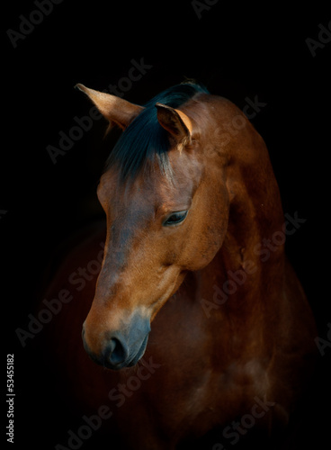 horse on black #53455182
