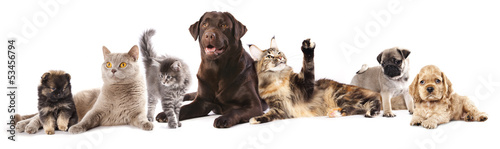 Group of cats and dogs in front of white background #53456794