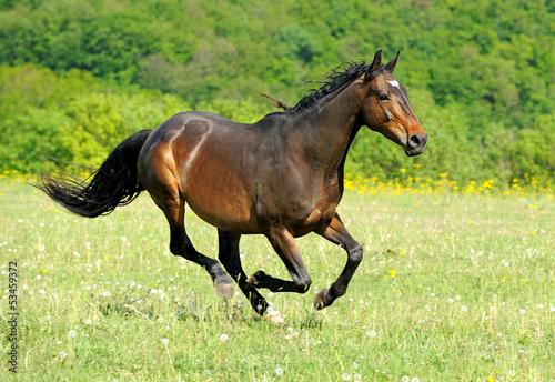 Fotografía  Horse