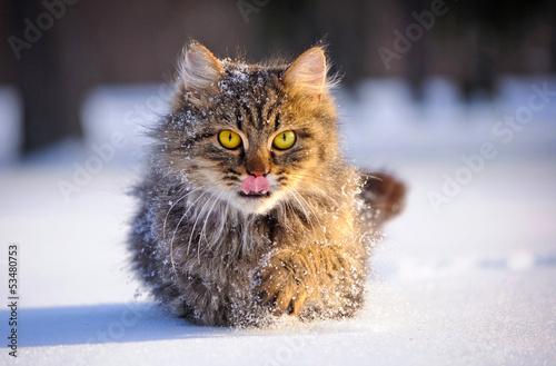 cat in winter #53480753