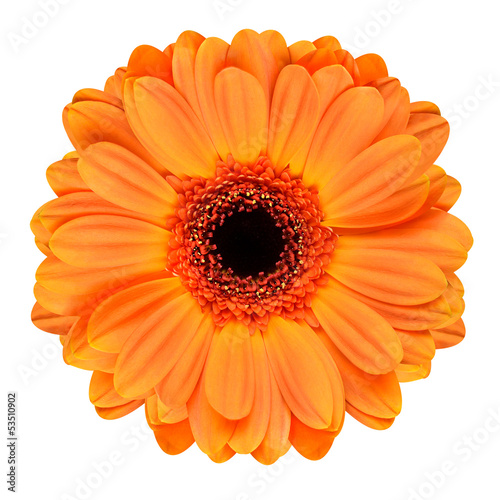 Foto auf Gartenposter Gerbera Orange Gerbera Flower Isolated on White