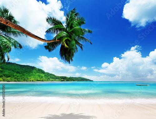 Foto auf Gartenposter Strand beach on Mahe island in Seychelles