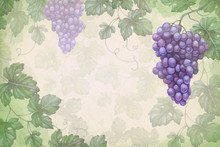 Artistic Background With Watercolor Illustration Of Grapes