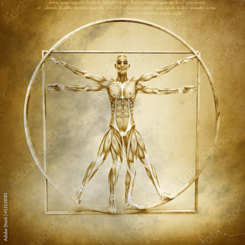 Fotografía  Anatomy of Vitruvian Man