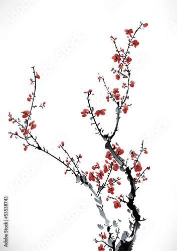 kwiaty-wisni-japonskiej