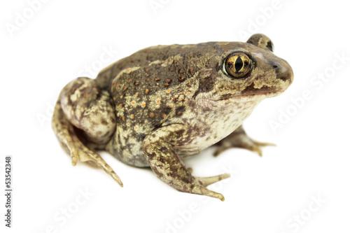 Foto op Plexiglas Kikker Toad