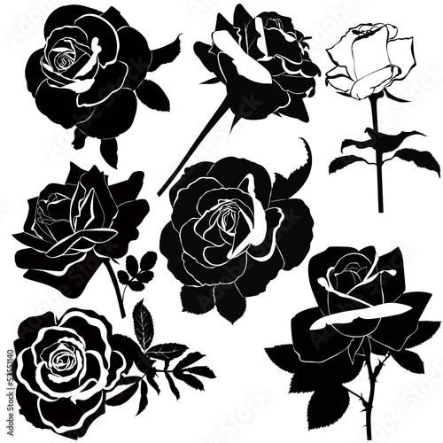 wektor-zbiory-kwiatow-rozy-na-bialym-tle