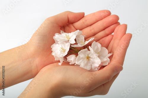 Wall Murals Pedicure 桜を持つ女性の手
