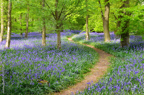 Photo Bluebell Wood