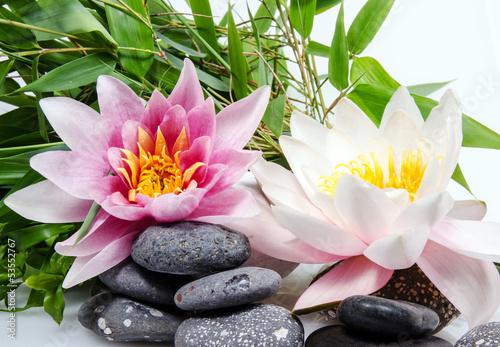 Garden Poster Lotus flower Seerosen: weiß und pink