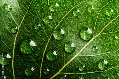 zielony-lisc-z-kroplami-wody