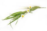 Fototapeta Kwiaty - bukiet kwiatów polnych i zbóż