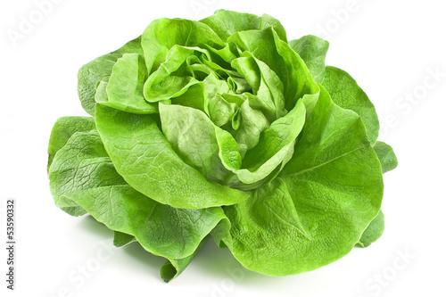 Fotografie, Obraz  Fresh lettuce