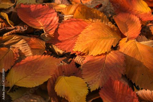 Photo оранжевая листва