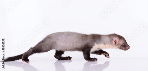 Photo  small animal rodent