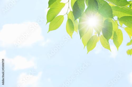 Fotografía  若葉と木漏れ日