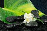 Fototapeta Kamienie - Jaśmin z kamieniami do spa
