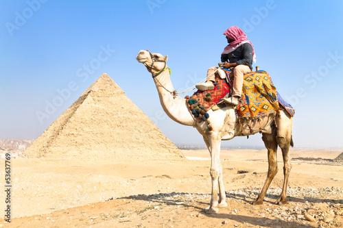 Tuinposter Egypte Camel at Giza pyramides, Cairo, Egypt.