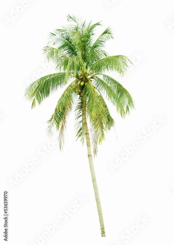 Aluminium Prints Palm tree Coconut palm tree isolated on white background
