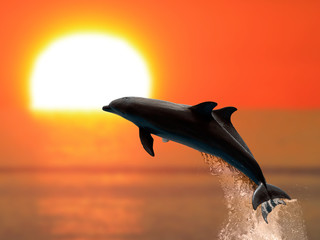 Fototapeta Delfin Dolphins at sunset