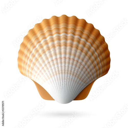 Fotografie, Obraz  Scallop seashell