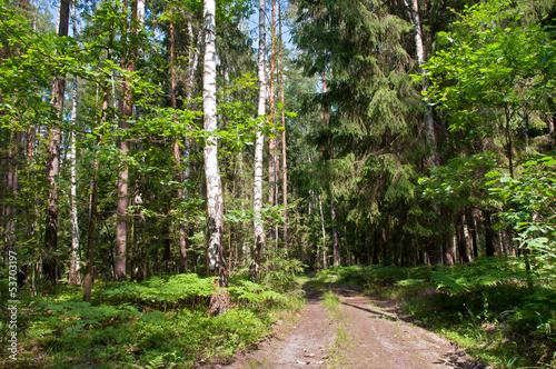 krajobraz-drogi-w-lesie-sosnowym-i-brzozowym