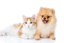 Orange Cat And Dog. Dog Looking At Camera. Isolated On White