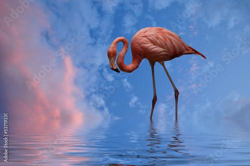 Foto op Aluminium Flamingo Flamingo
