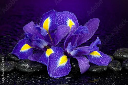 Spoed Foto op Canvas Iris Irysy z kamieniami do spa