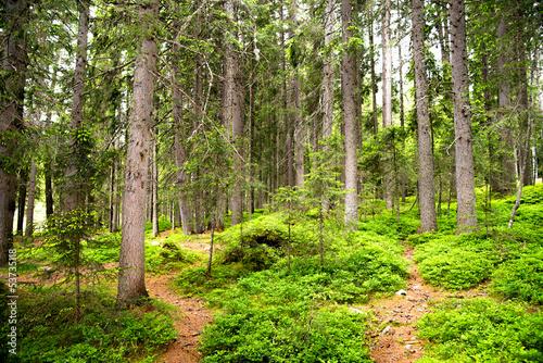 Papiers peints Route dans la forêt sentiero nel bosco