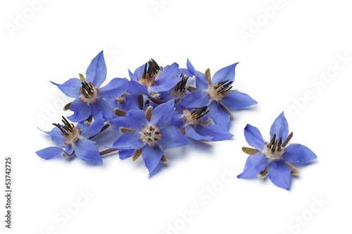 Fotografie, Obraz  Heap of fresh borage flowers