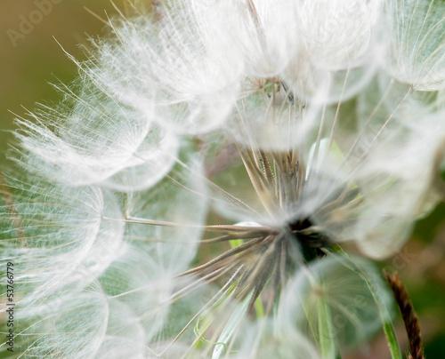 Montage in der Fensternische Lowenzahn und Wasser Large dandelion flowers parachutes