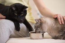 Unrecognizable Woman Feeding Her Two Cats At Home