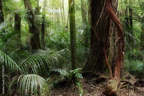 las-tropikalny