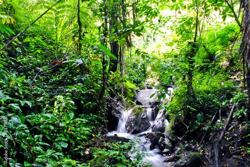 Foto op Plexiglas Indonesië Jungle in Tentena