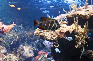 Fototapeta na wymiar Aquarium