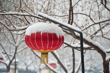 A Chinese Lantern In The Snow