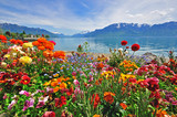 Fototapeta Landscape - Flowers in swiss Alps