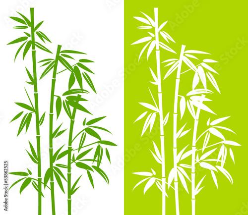 Bamboo Duo - 53862525