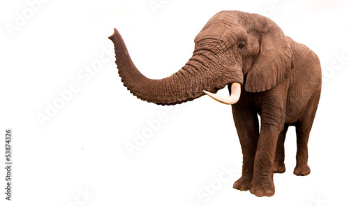 Photo Stands South Africa Elephant Isolated