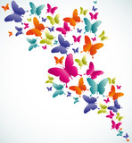 Butterfly summer splash