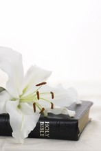 Holy Bible With White Lily And Copy Space