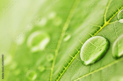 Poster Vegetal Water drops on leaf macro
