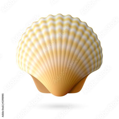 Valokuva Scallop seashell