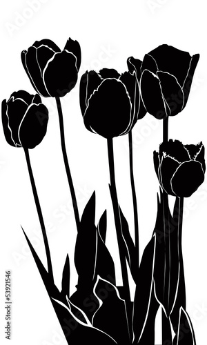 Poster Bloemen zwart wit tulips flowers it is isolated