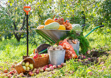 Harvest Of Vegetables And Fruits