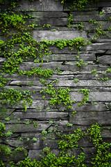 Fototapeta Struktura ściany Old stone wall with leaves background
